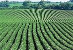 Условия аренды сельскохозяйственных земель