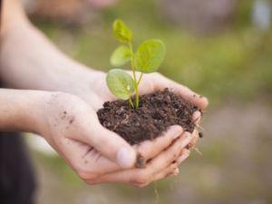 Особенности земель сельхоз назначения