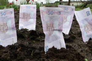 Стоимость работ при оценке земли