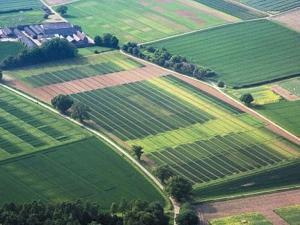 Во сколько обойдется аренда земли у государства?