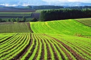Как можно использовать земли сельхозназначения