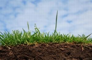 Особенности сельскохозяйственных земель в России