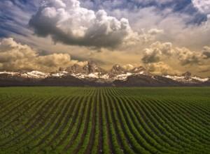 Земельный участок - предмет договора аренды земли