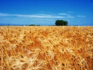 Фермерское хозяйство, какой вид деятельности выбрать