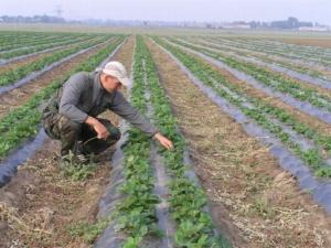 Как открыть фермерский бизнес с нуля