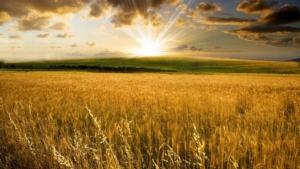 Строительство на сельскохозяйственной земле