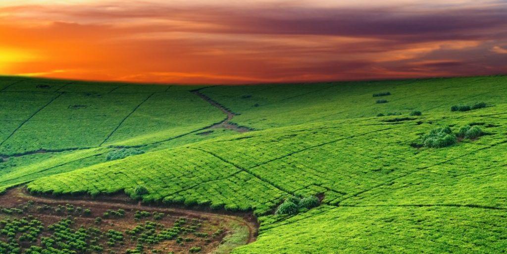 Земельный налог для организаций