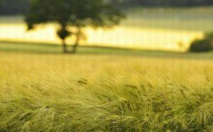 Можно ли строить жилую недвижимость на сельскохозяйственной земле