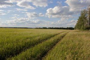 выделить земельный участок и продать