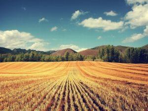 Процедура продажи земельного пая