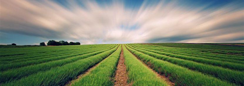 Субсидии фермерам в 2017 году