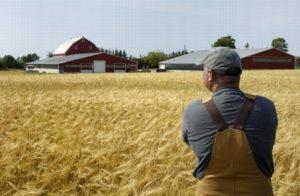 Как оформить завещание на земельный пай