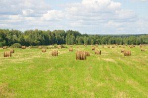 Оформление покупки земельного пая