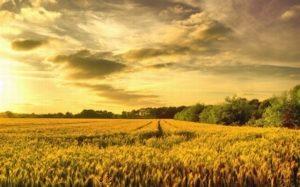 Закон о земельных паях
