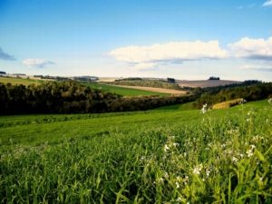 Приватизация земельных паев