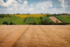 Земельный пай в собственность