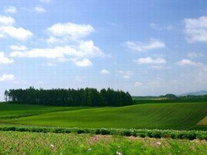 Земельный пай в наследство