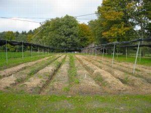 Как оформляется земельный пай