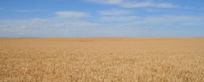 Структура классификатора видов разрешенного использования земель