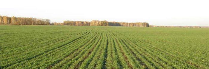 Приказ Минэкономразвития о классификаторе видов разрешенного использования земель