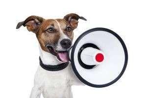Куда жаловаться, если у соседей лает собака