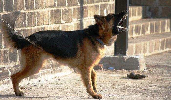 Решение конфликта с соседями из-за собаки в зависимости от продолжительности лая