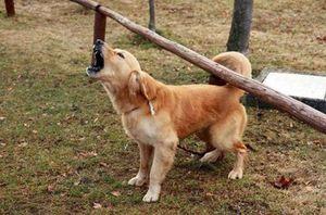 Законы о конфликтах соседей из-за лая собаки
