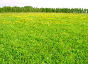 Выписка из ЕГРН на земельный участок (образец формы.