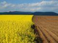 Что такое конфискация земельного участка, правила ее проведения