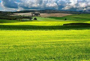Конфискация земельного участка в форме выкупа