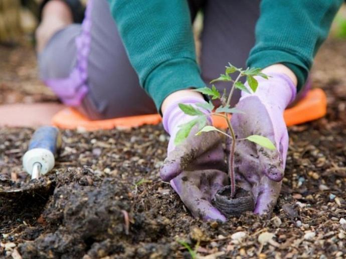 Новый закон о садоводстве